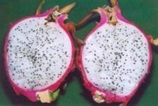 vietnam-voyage-degustation-de-fruit-du-dragon-exotique