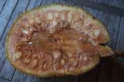 voyage-vietnam-decouverte-degustation-de-fruit-exotique-fruit-du-jaquier