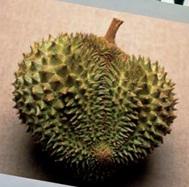 voyage-vietnam-degustation-de-fruit-exotique-durian