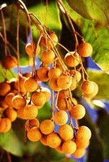voyage-vietnam-decouverte-degustation-de-fruit-exotique-longane