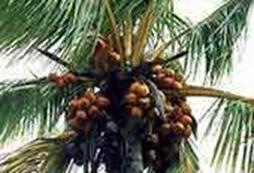 voyage-vietnam-decouverte-degustation-de-fruit-exotique-noix-de-coco
