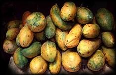 voyage-vietnam-decouverte-degustation-de-fruit-exotique-papaye